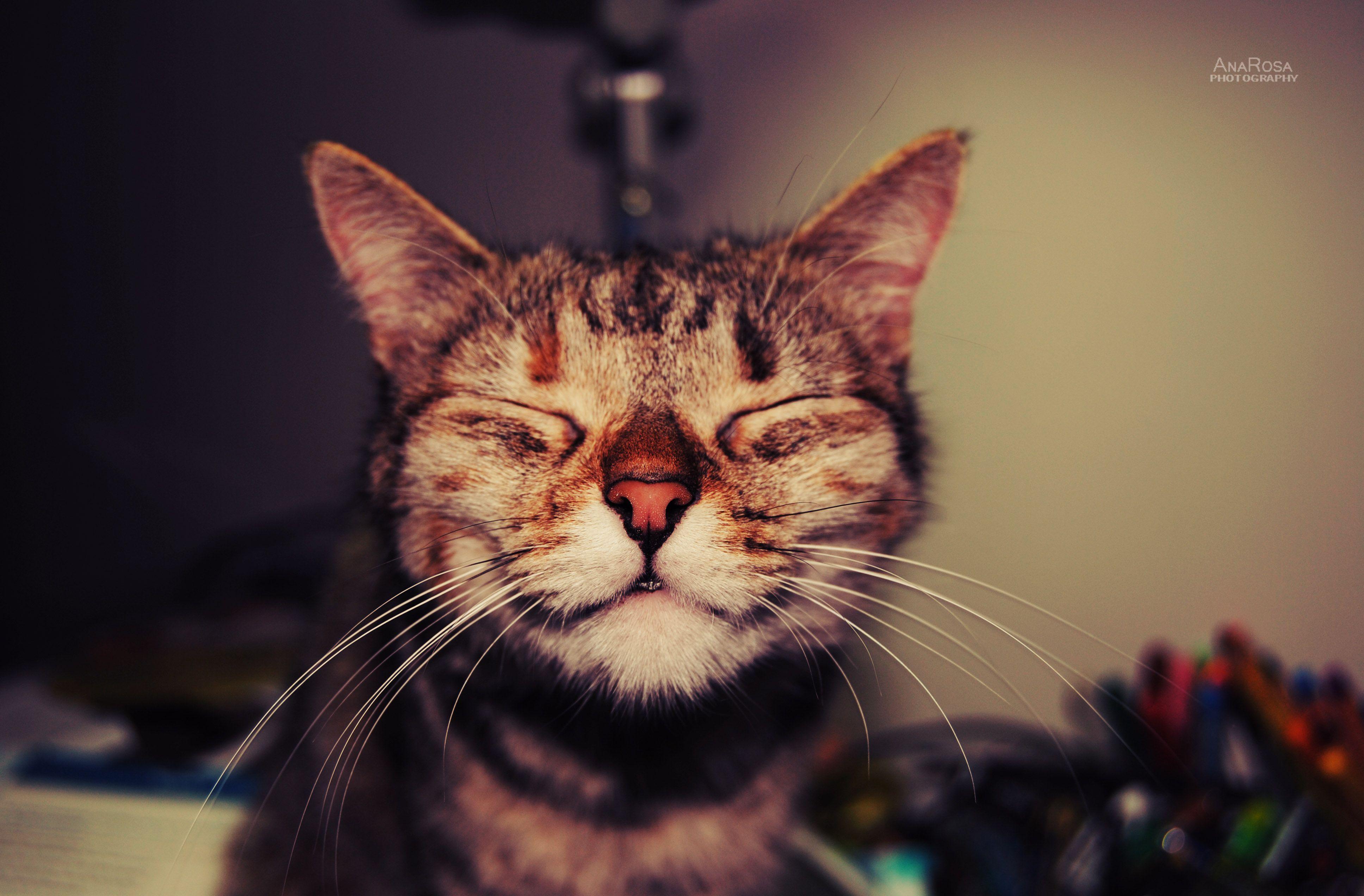 Happy Cat Happy cat, Cats, My cat has fleas