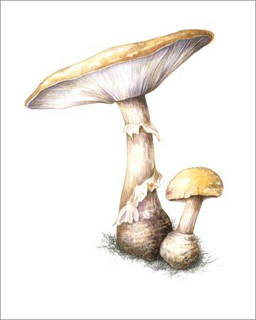 #40 Mushrooms Watercolor