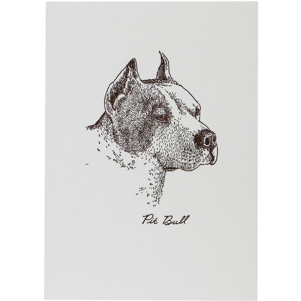 Box of 6 Pitbull Notecards ❤ liked on Polyvore