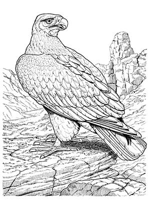 Ausmalbild Adler Schulterblick Eagle coloring pages