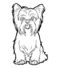 Yorkie Coloring Page In 2020 With Images Yorkie Painting Dog Coloring Page Puppy Coloring Pages