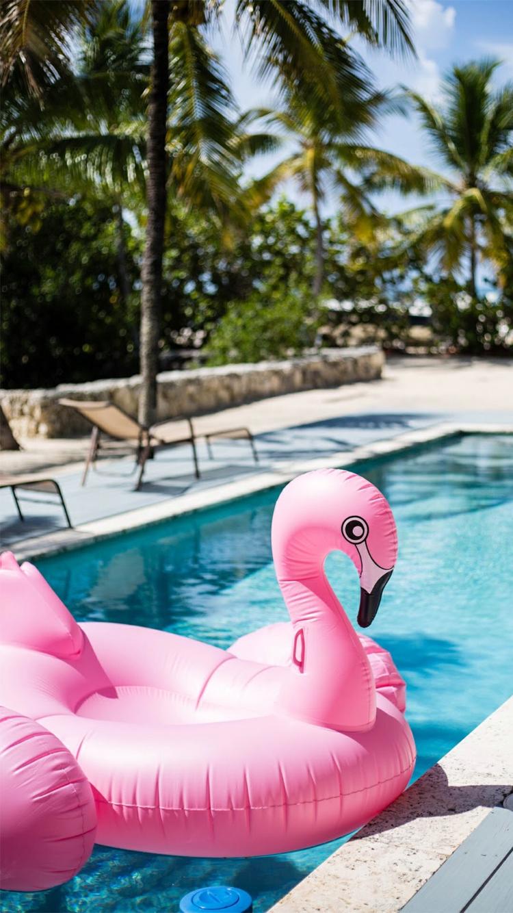 Background flamingo flamingos iphone wallpaper wallpaper - Wallpaper Flamingo Floataussifurlaflamingosjust Lovewallpaperssummerbeautiful Backgroundsholiday