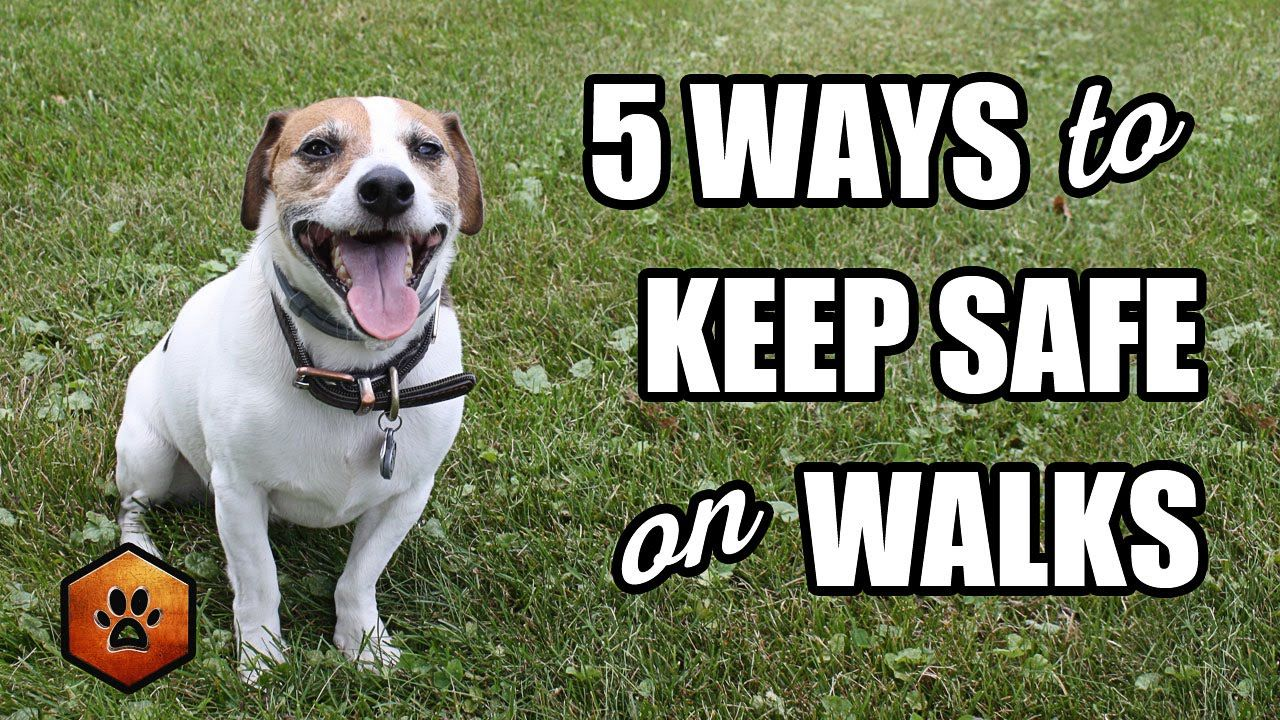 Walking a Dog? 5 Ways to Keep Safe With Situational