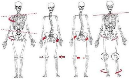 Four Types Of Posture Deviations Torso And Pelvic Elevation And