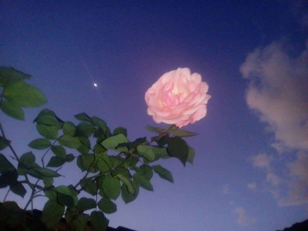 Pinterest Flowers: FOLLOW Unicorn Glow Instagram