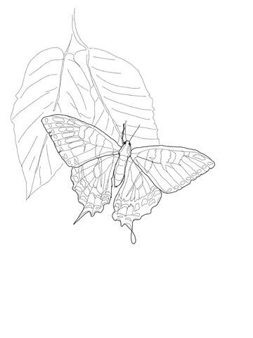 Eastern Tiger Swallowtail Coloring Page From Butterfly Category