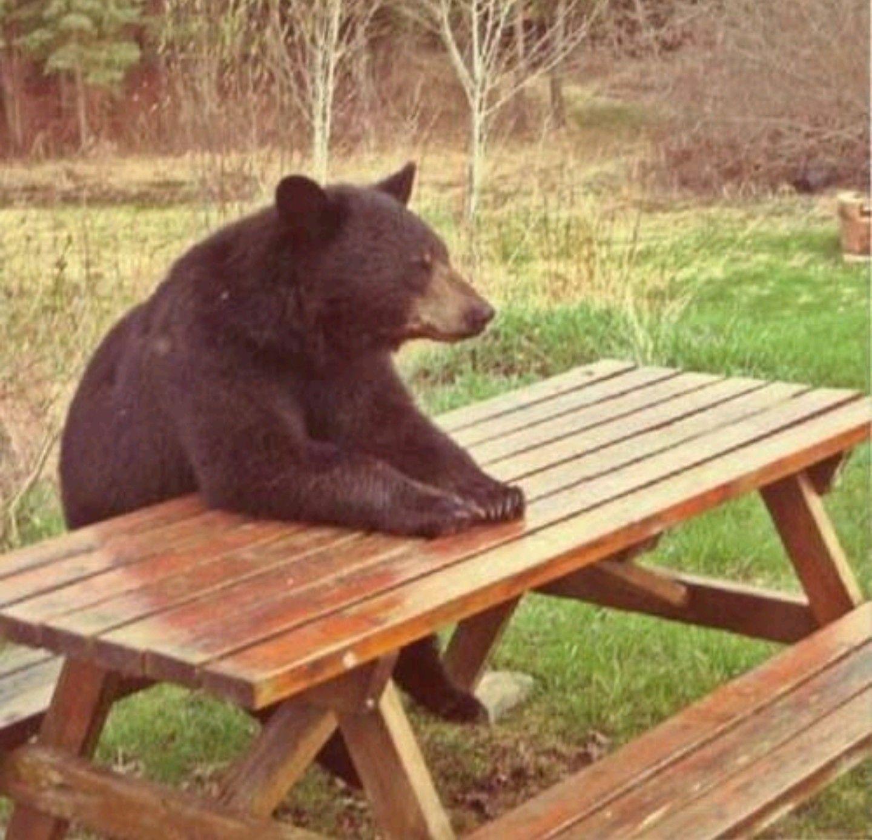bear wrongs patiently - HD1440×1385