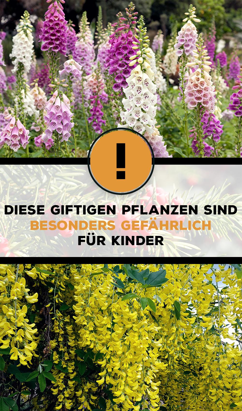 Giftige Gartenpflanzen Fur Kinder Einheimische Und Co Familie De Giftige Pflanzen Pflanzen Gartenpflanzen