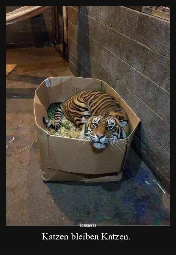 Photo of Los gatos siguen siendo gatos …   Fotos divertidas, refranes, chistes, realmente divertidos – pinanimals