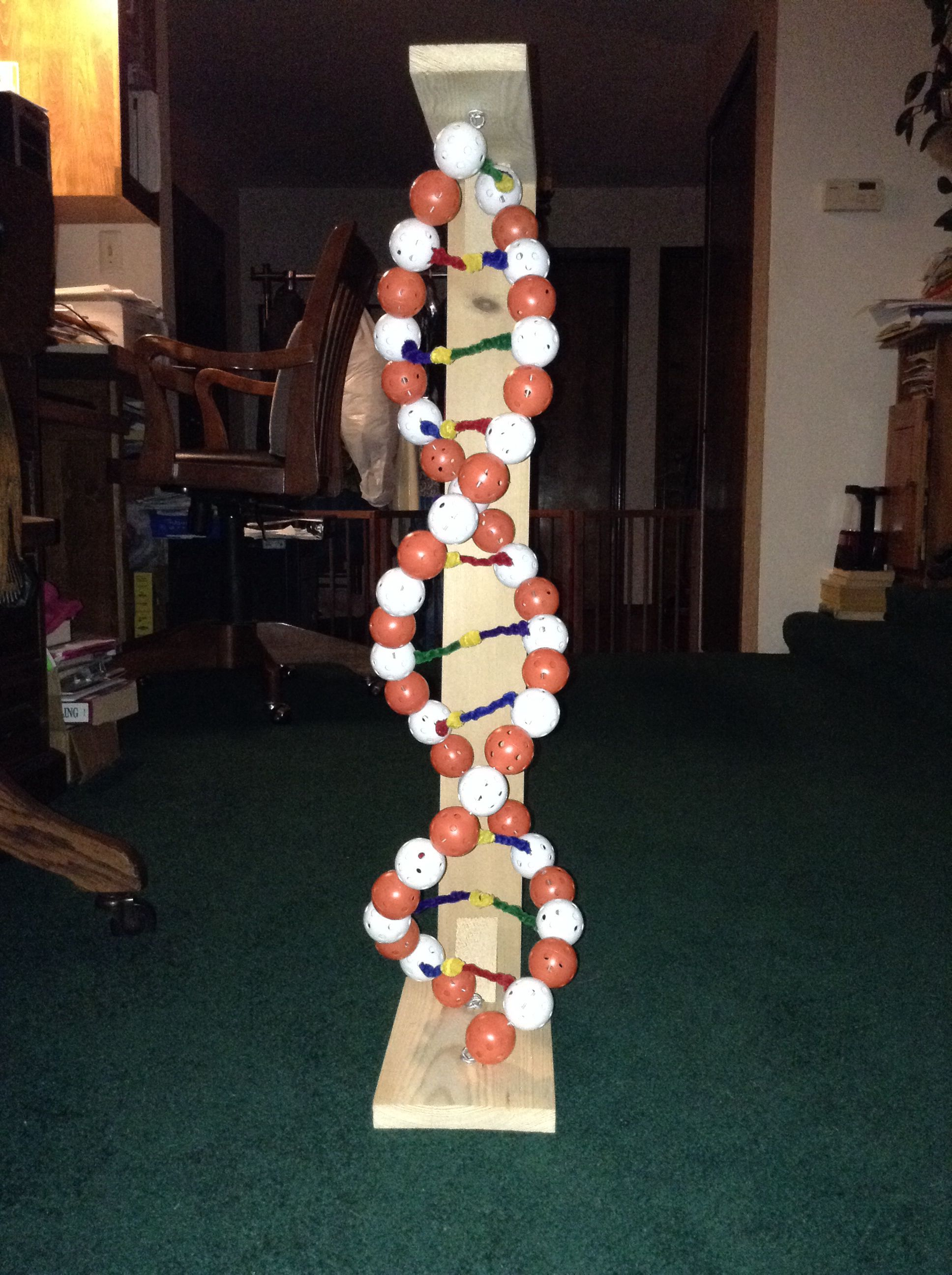 Dna Model10th Grade School Projects Biology Lessons Dna Model