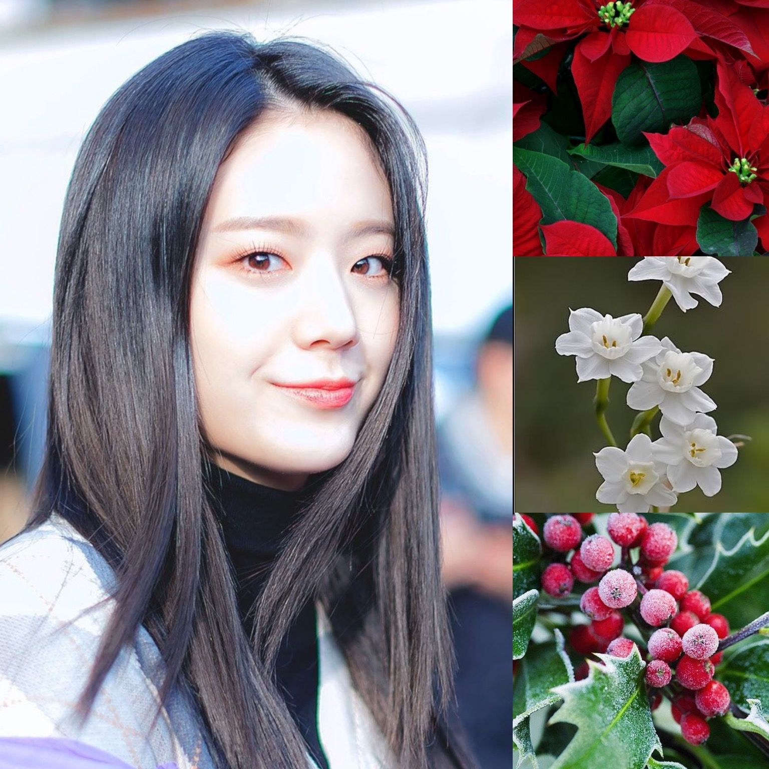 BirthFlowers&KPOP // Poinsettia, Holly & Narcissus