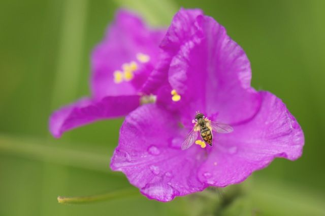 Understanding the beauty and science of flowers.