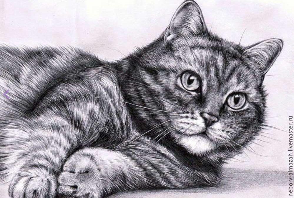 нарисованы карандашом котики картинки общем