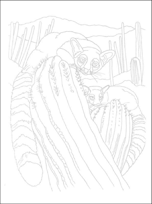 j benson coloring pages | Animal Illustrations to Paint or Color | Additional Photo ...