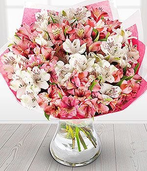Flowers Pink Alstroemeria Bridal