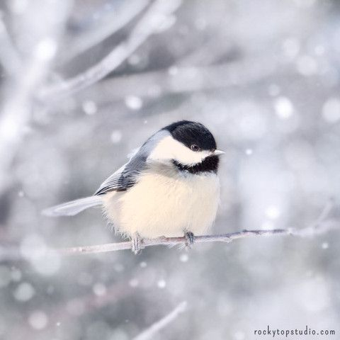 Fine Art Bird Photography Print