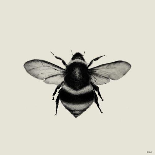 Bumblebee Pencil Graphite Jennifer Hui 2014 Etsy