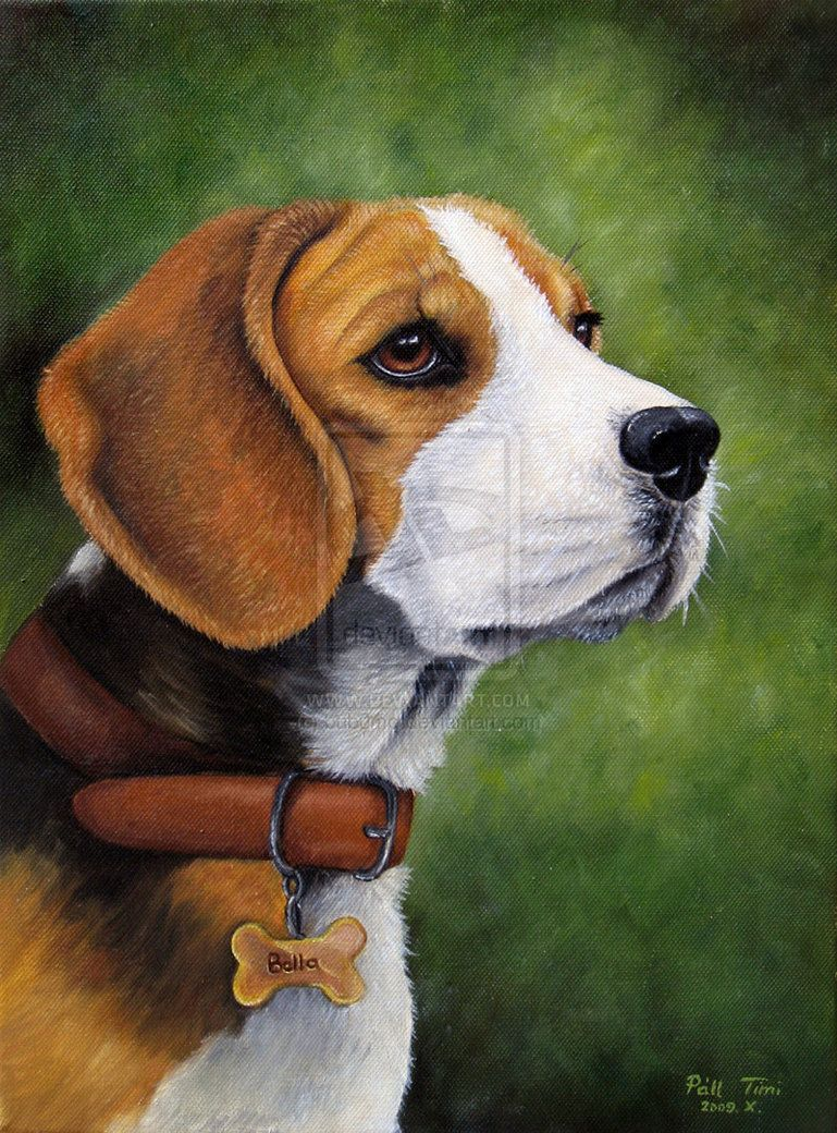 Beagle Painting Beautiful Dog Paintings Beagle Art Calm Dog
