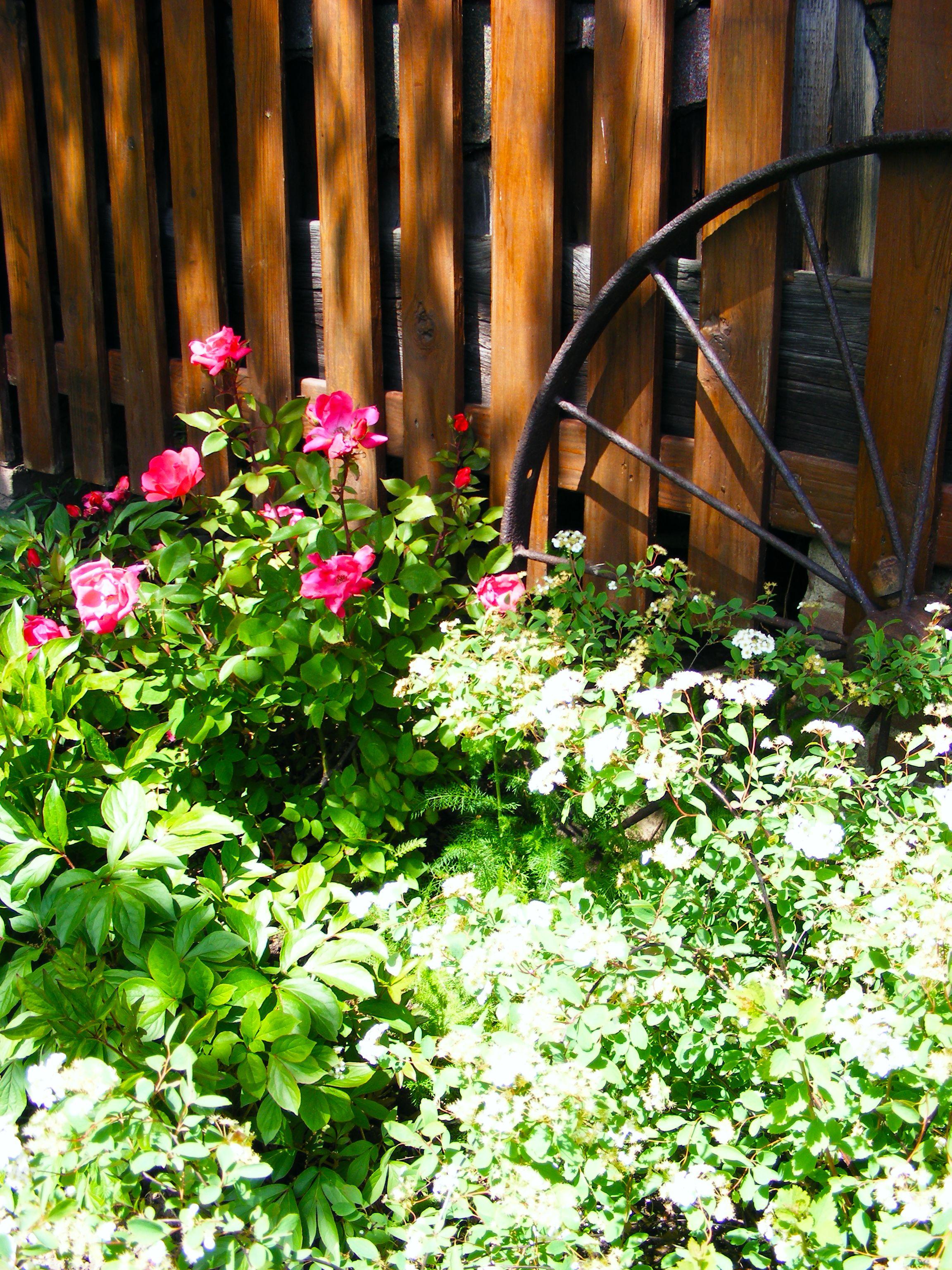Wagon Wheel Garden Vintage Antique Flower Bed Summer Spring   4Rustic Garden    Pinterest   Wagon Wheel Garden, Wagon Wheels And Gardens
