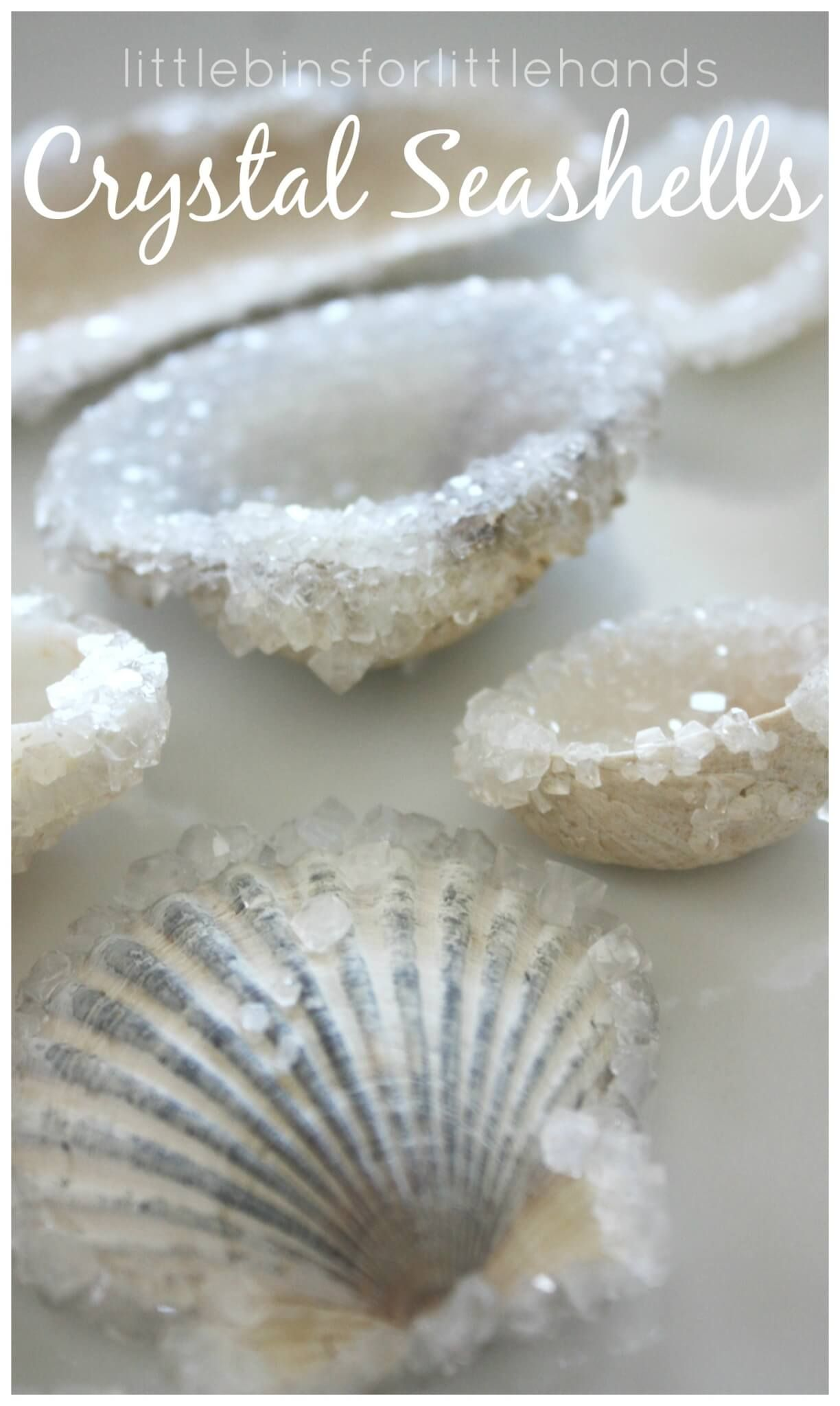 How To Make Crystal Seashells With Borax is part of Crystal seashells - Summer means the ocean and seashells for us! We like to get creative with our summer science experiments so we had to try this crystal seashells borax science experiment, which is actually an easy science experiment to set up! Simply mix the solution and set aside  Over the course of 24 hours, you can observe some neat changes! Growing crystals on seashells is an awesome STEM project for kids! CRYSTAL SEASHELLS SCIENCE EXPERIMENT WITH BORAX! Grow Crystal Seashells Overnight! There are super cool ways to explore the sciences for each season! For summer, we decided to experiment with growing borax