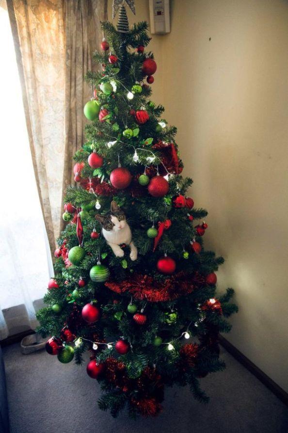 Cats Vs Christmas Trees.Cats Vs Christmas Trees 33 Pics Memes Funny Animals