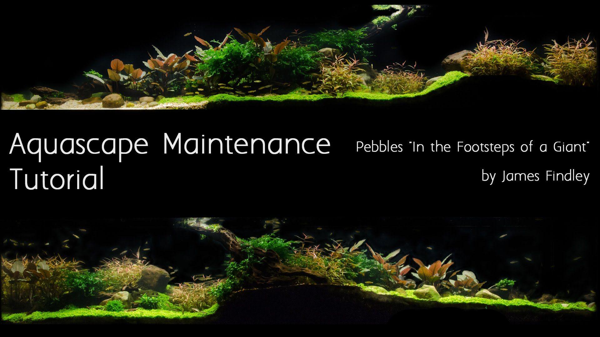 Aquascape Maintenance Guide The Green Machine º Aquascapes º