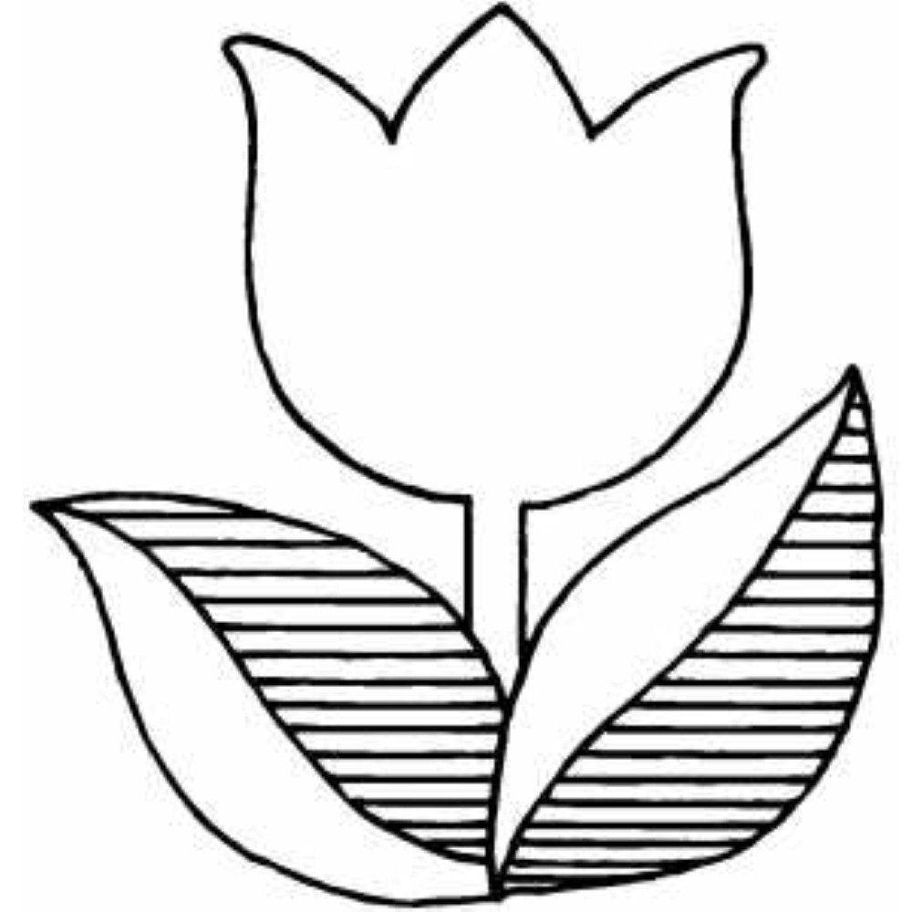 Marigold 6 Flower Drawing Coloring Pages Free Coloring Pages