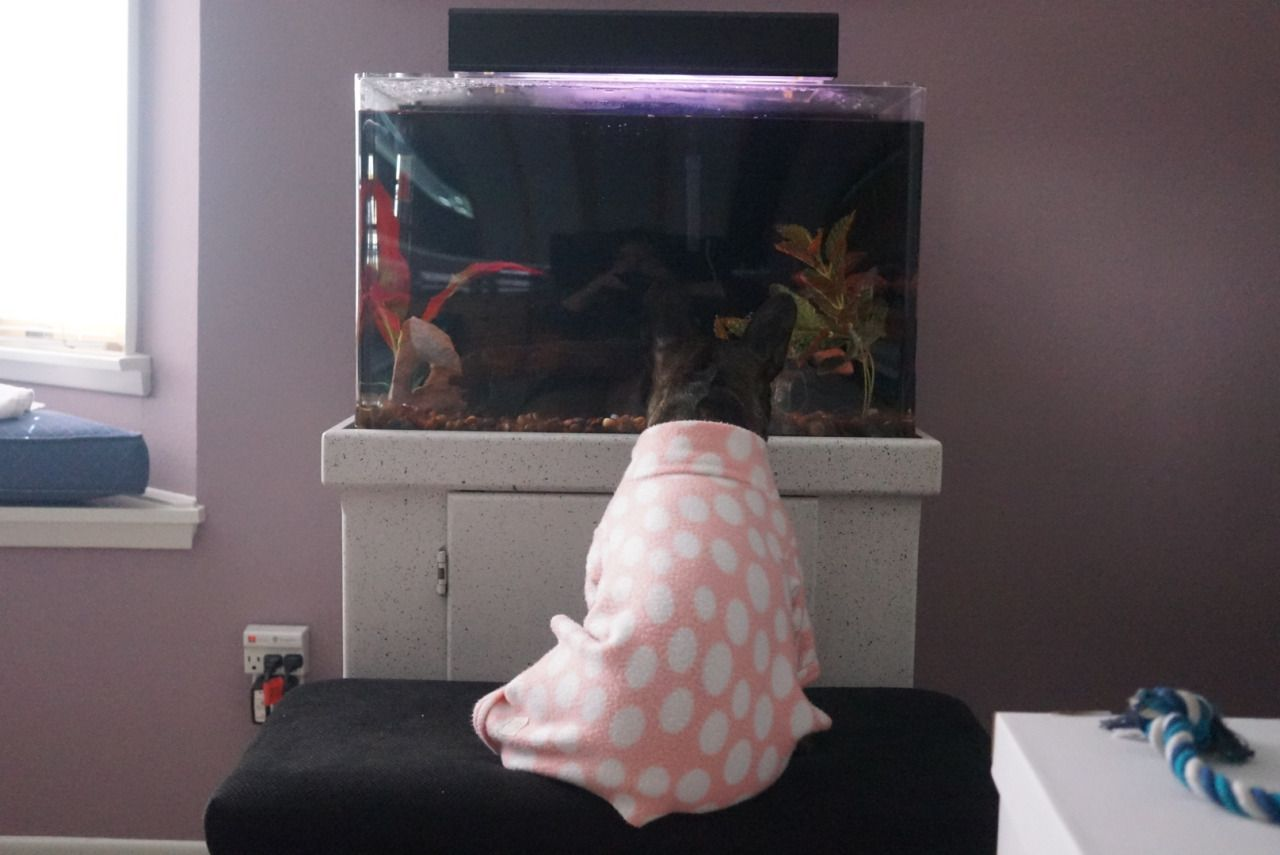 Mashable — My plans for New Year's Eve Fish tank