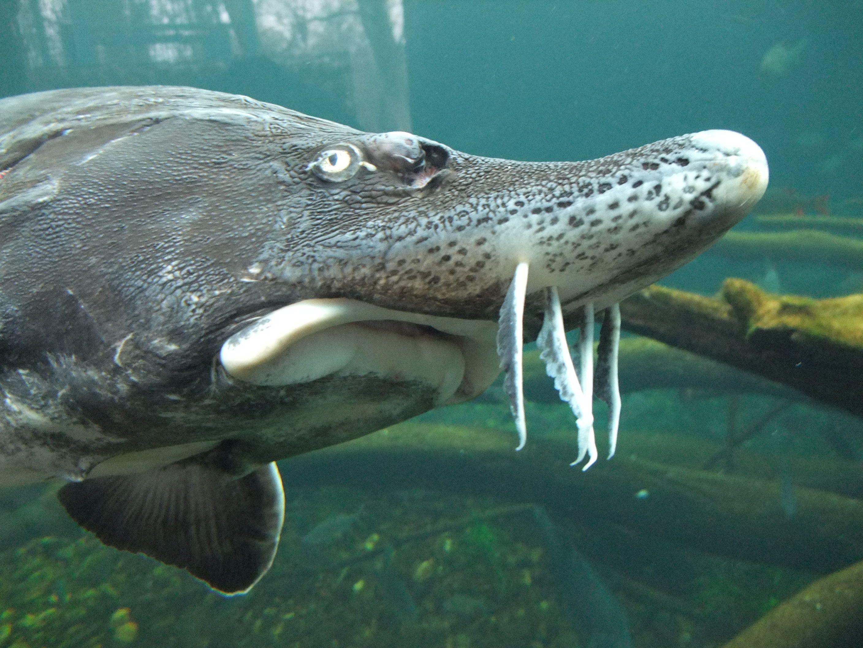 Pin On Ocean Life Fish