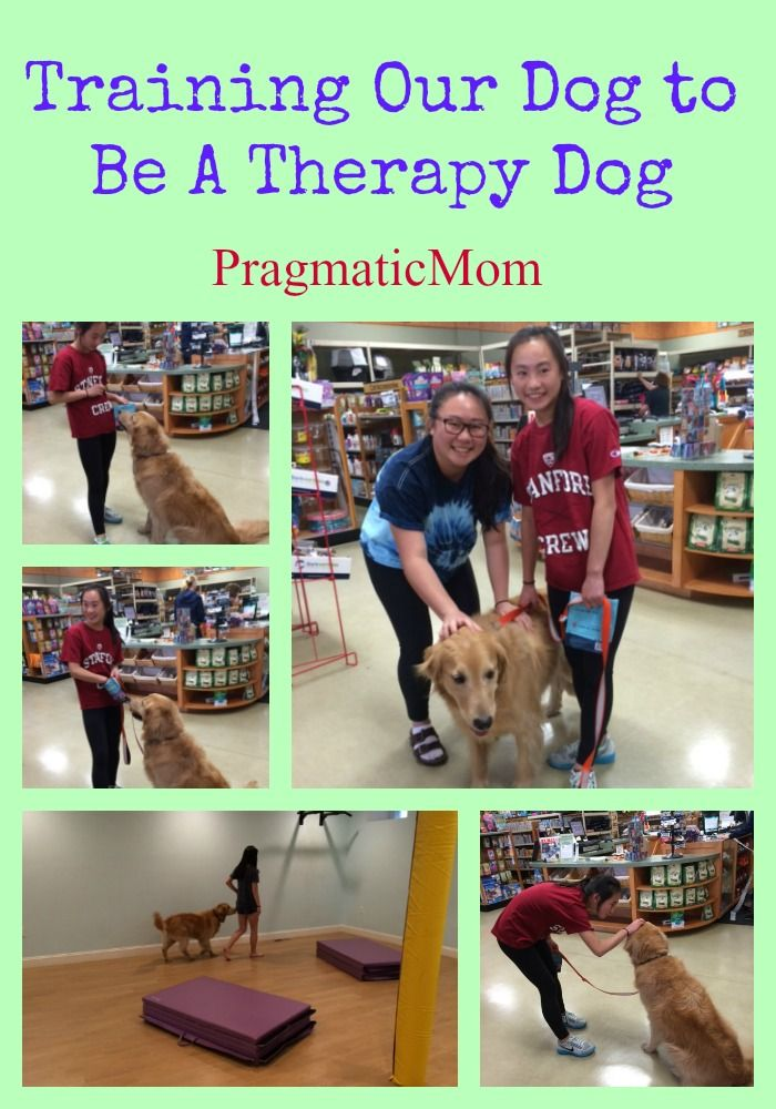 Training Our Dog To Be A Therapy Dog Therapy Dogs Dog Training