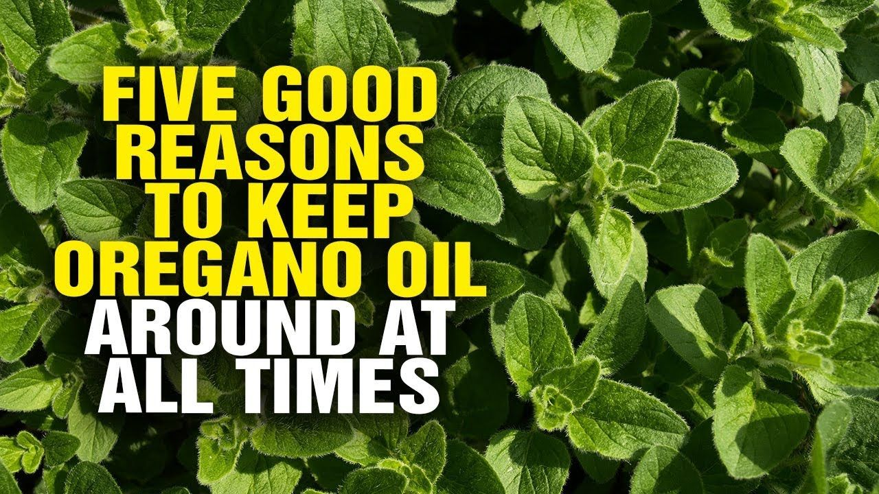 Five good reasons to keep oregano oil around at all times