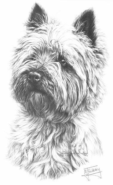 Cairn Terrier Cairn Terrier Terrier Cairn Terrier Puppies