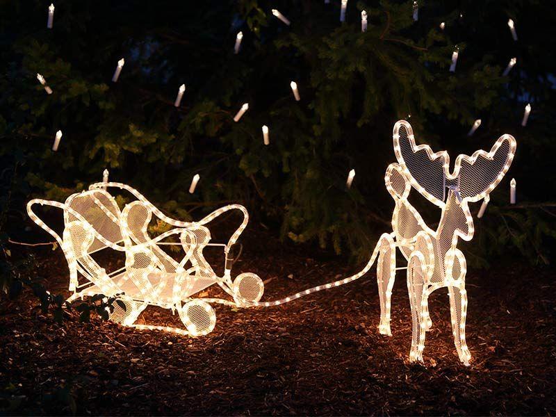 Rentier mit lichtschlauch beleuchtet als for Weihnachtsreh beleuchtet