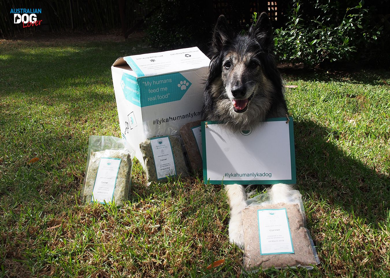 Lyka Pet Food Fresh Dog Food Delivery Review Australian Dog