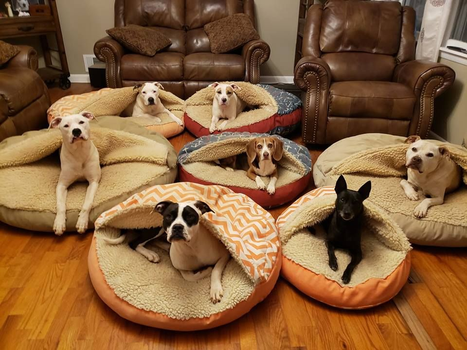 """You know your pets love their cozy cave when they would"