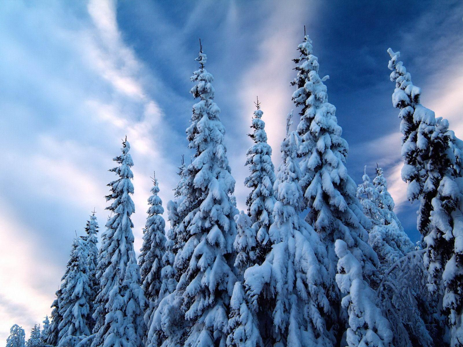 Snow Desktop Backgrounds Winter Scenery Winter Trees Tree Winter Wallpaper