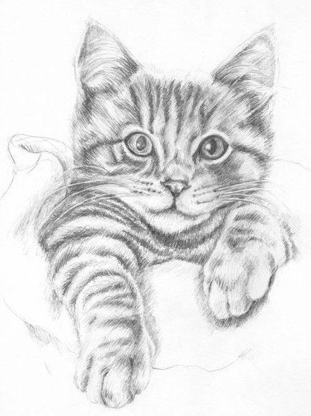 Pin Von Ska Auf Bleistiftzeichnungen Zeichnungen Katzen