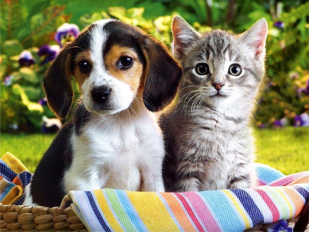 Beagle Puppy And Kitten In A Basket Cute Puppies And Kittens