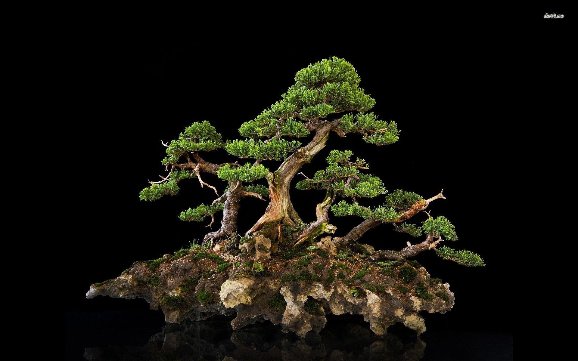 Bonsai Hd Wallpaper Bonsai Tree Care Bonsai Tree Juniper Bonsai