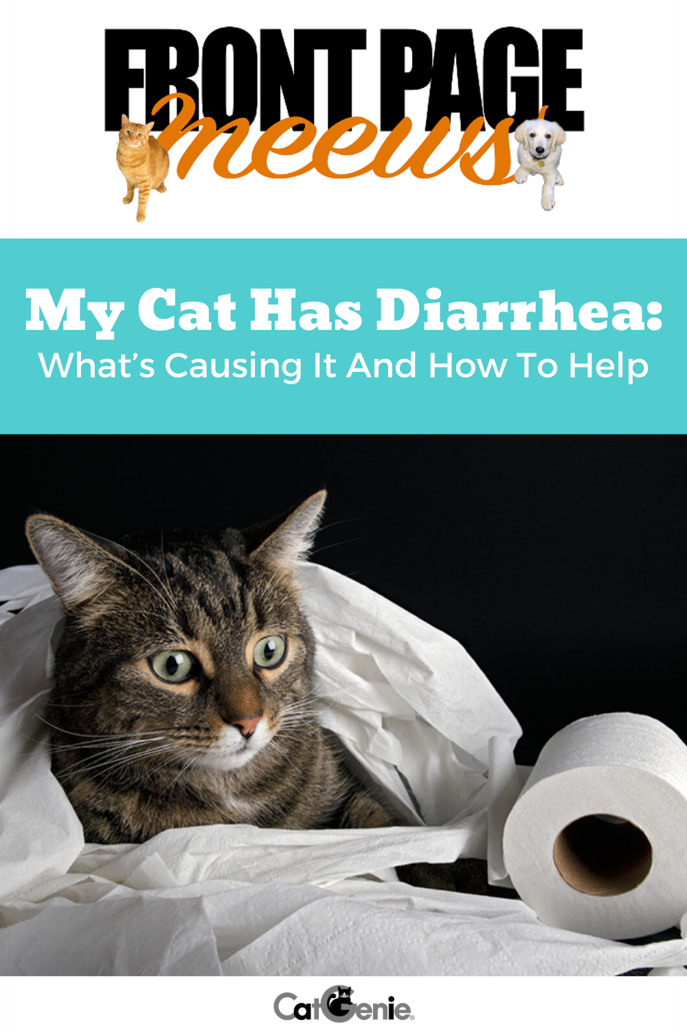 When Your Kitty Isn T Feeling Well You Can Feel So Helpless And When It Comes To Their Potty Problems You Might Feel L Cat Diarrhea Cat Health Diarrhea