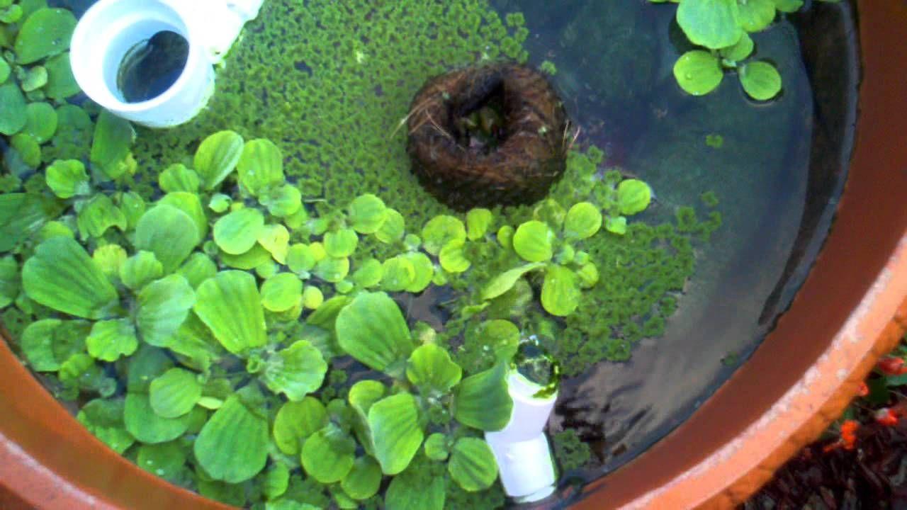 Diy koi pond filter koi pond pond filters pond