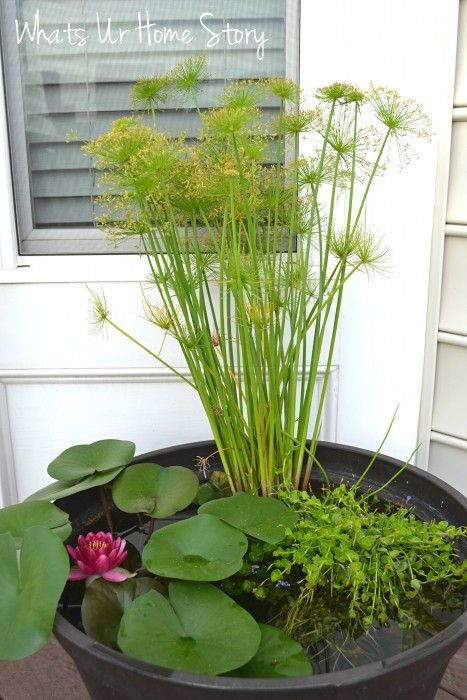 how to grow water lilies on your deck jardinage jardin. Black Bedroom Furniture Sets. Home Design Ideas