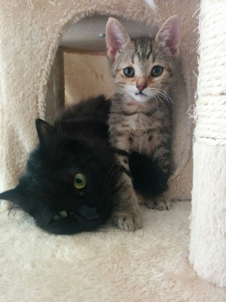 Penny The Abandoned Kitten Defied The Odds And Can T Stop Smiling About It Cats And Kittens Beautiful Cats Crazy Cats