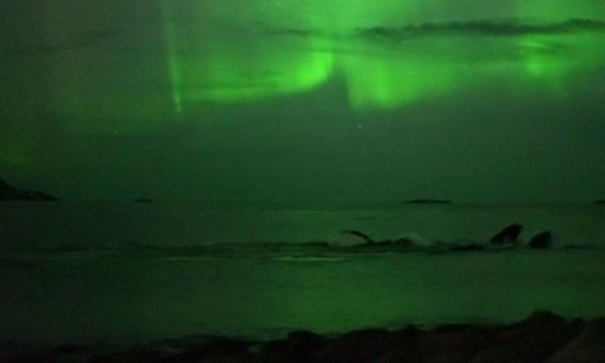 Underwater Northern Lights