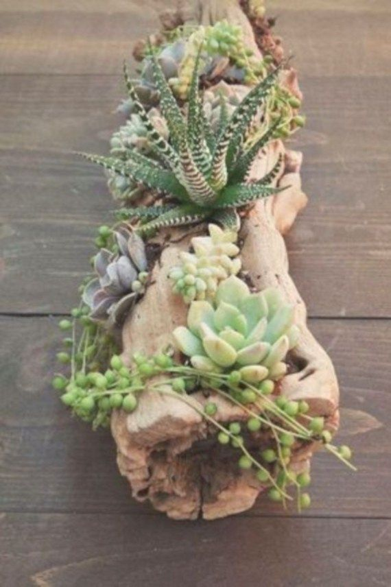 54 Ideas to Arrange your Succulent with Driftwood -   9 plants Succulent in driftwood ideas