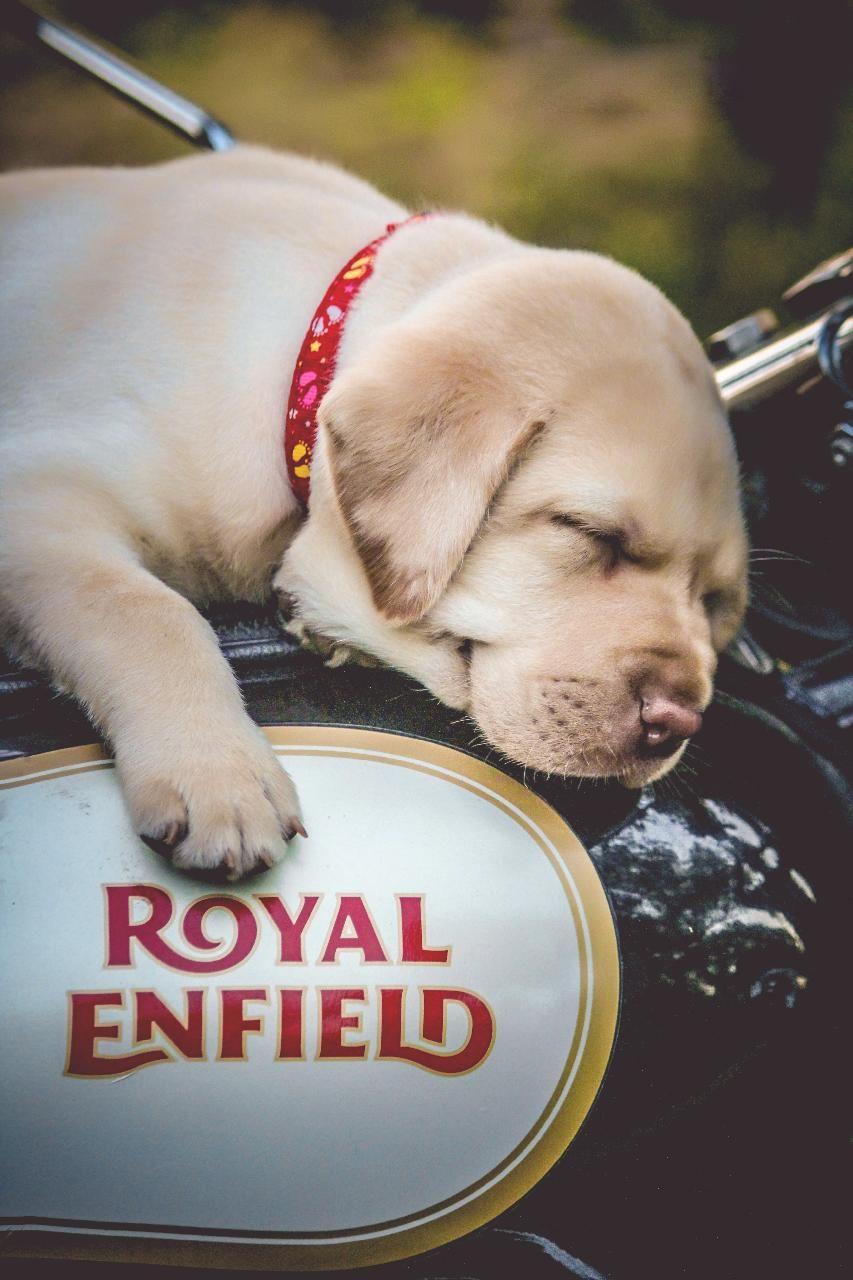 Download Royal Enfield Wallpaper By Gurusad 91 Free On Zedge