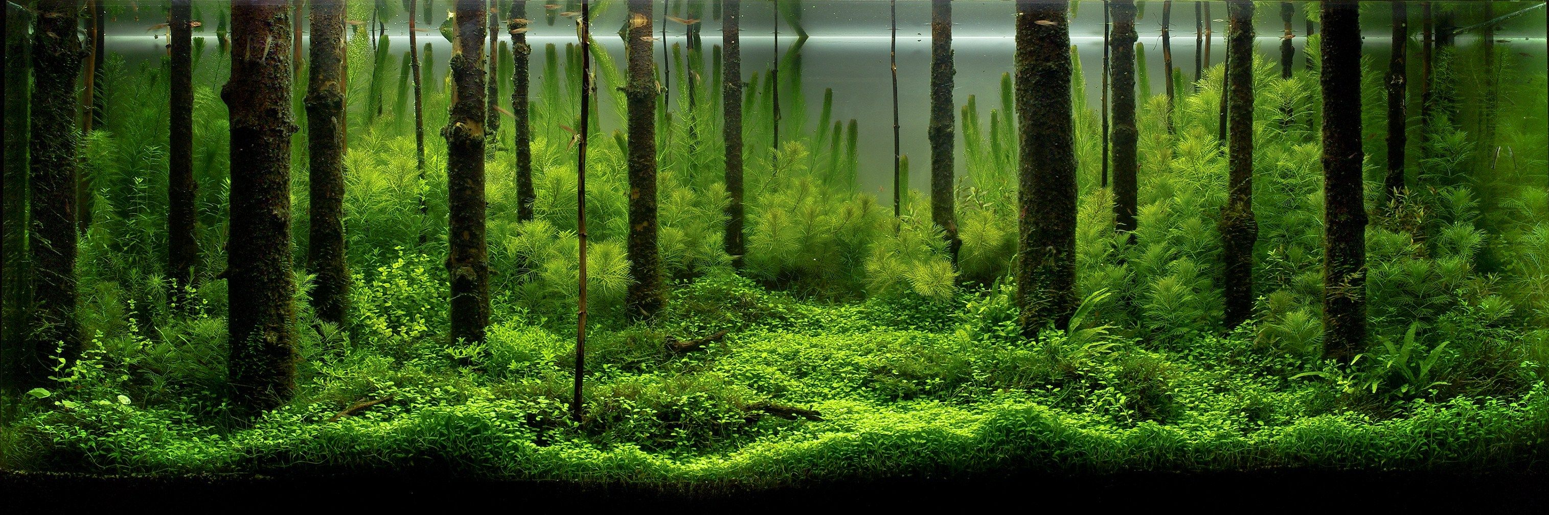 17 Best 1000 images about aquascape on Pinterest Urban gardening Art