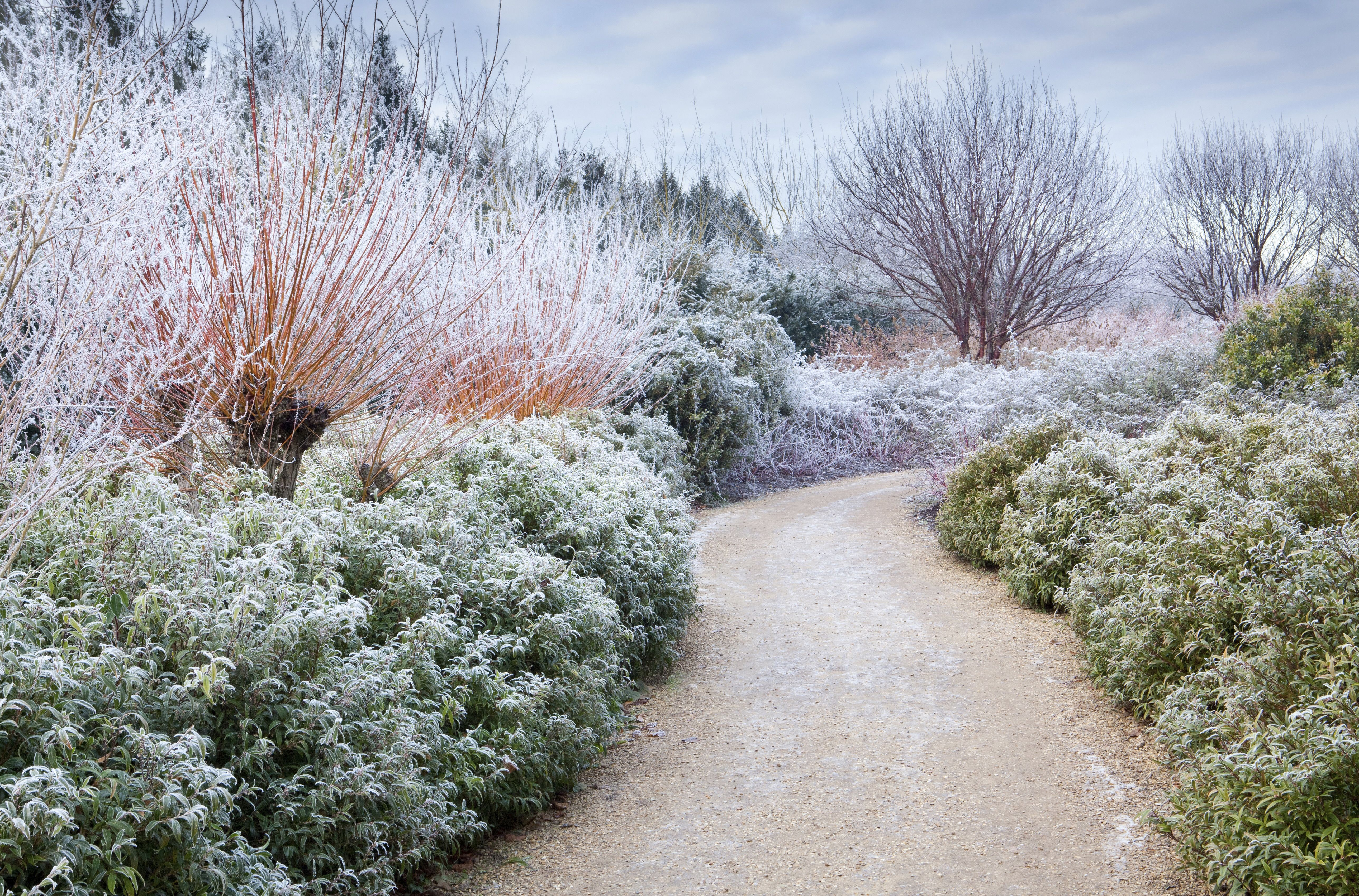 anglesey abbey garden by marianne majerus gardens