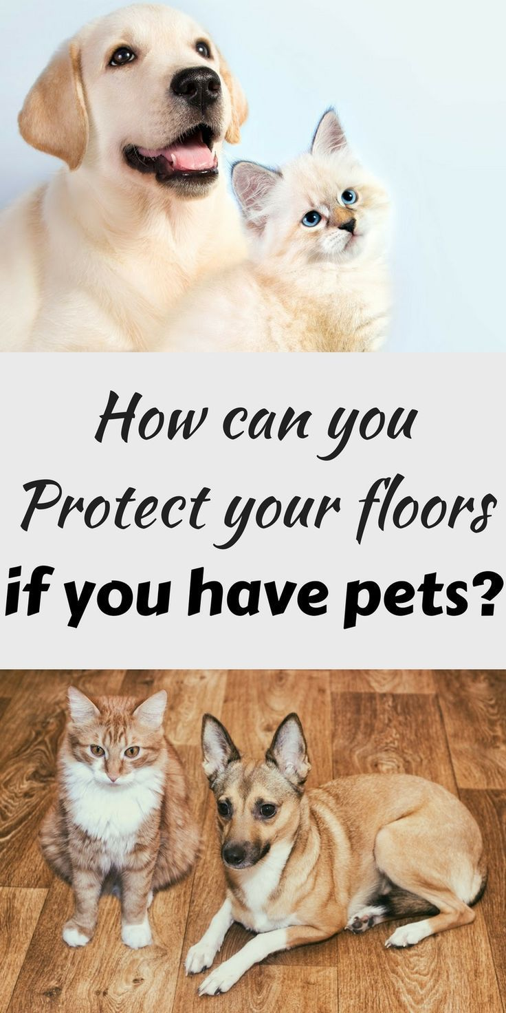 Helpful items if you have pets and want to protect your