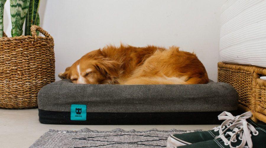 6 Luxury Dog Beds Orthopedic Dog Bed Dog Bed Luxury Dog Bed
